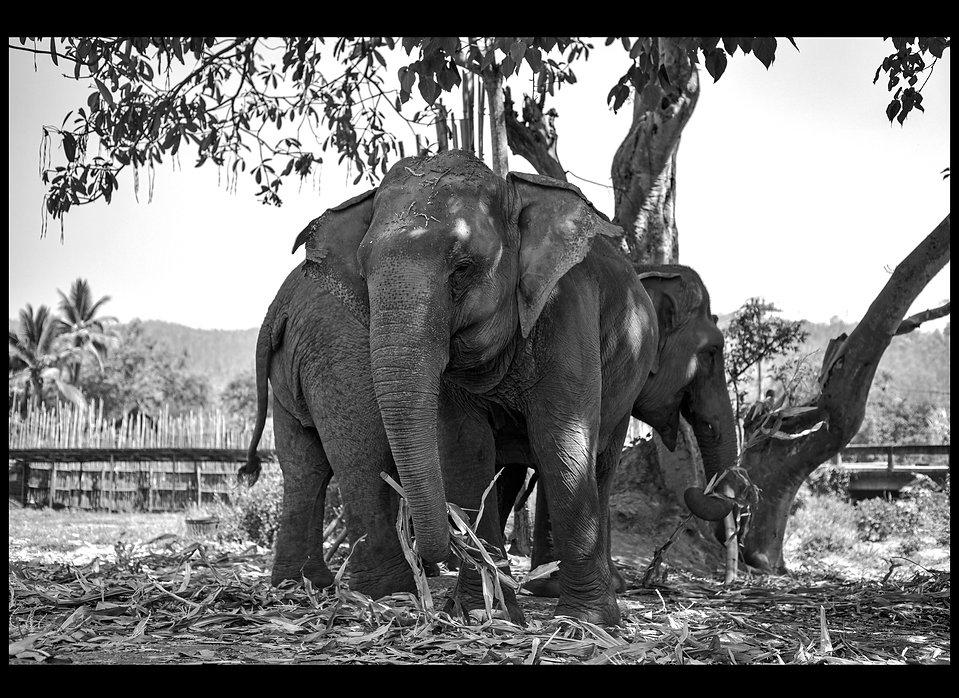 elefante-donacion-17_edited.jpg