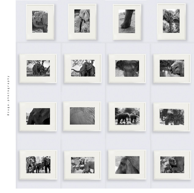 elefante-marcos.jpg