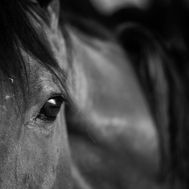caballo-1.jpg