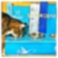 Maxbar, Katze Max mit Strandbar.jpeg