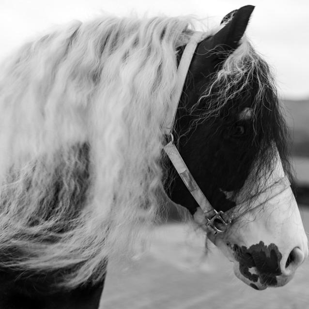caballo-0.jpg