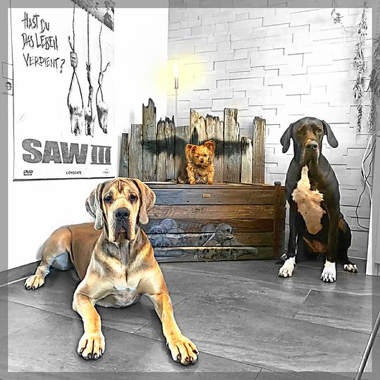 DoggsBox, Altholz Bar für Doggen, MonoInc Logo und Totenköüfen.png