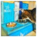 Katze Max mit Strandbar.jpeg