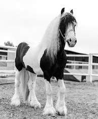 caballo-2.jpg