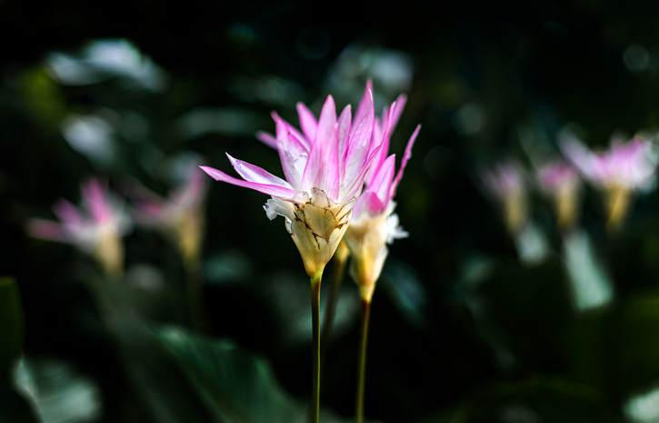 flores-9.jpg