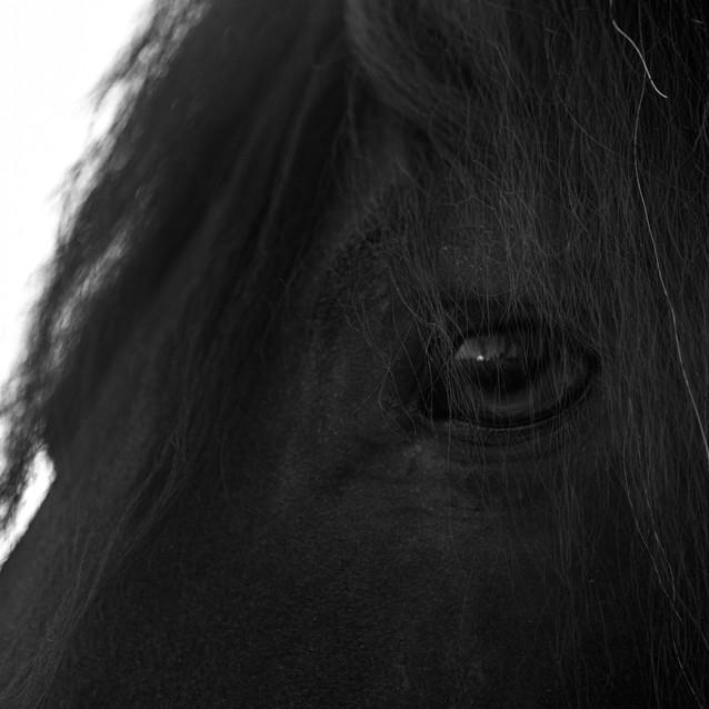 caballos-2.jpg