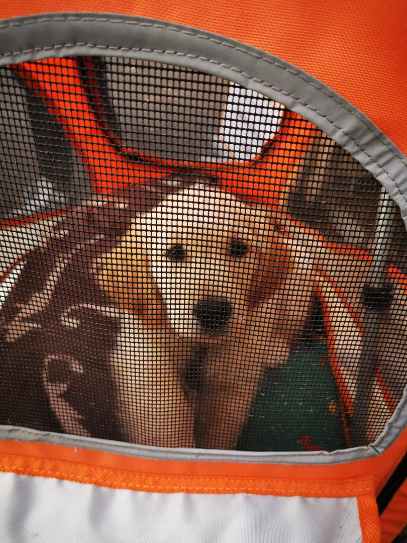 IMG_20191102_163214.jpgFrollein Polly auf dem Hundeweihnachtsmarkt, Gertrudenhof Hürth