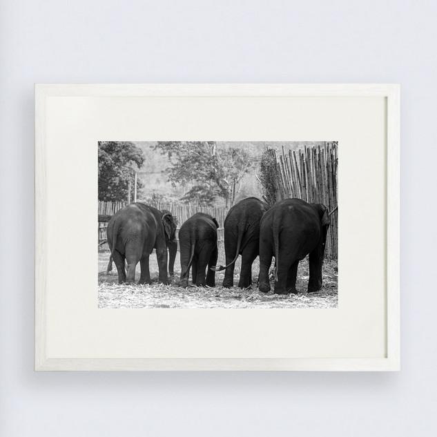 elefante-18.jpg
