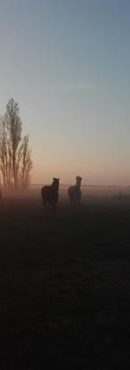 Sonnenaufgang2.jpg