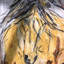 The yellow stallion