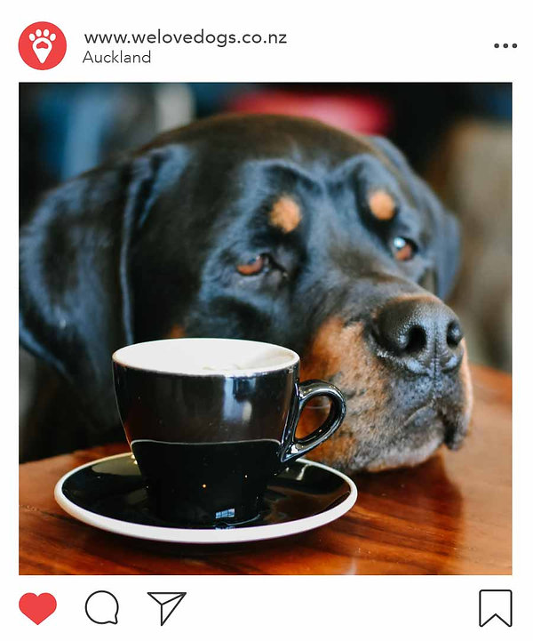 We love Dogs NZ