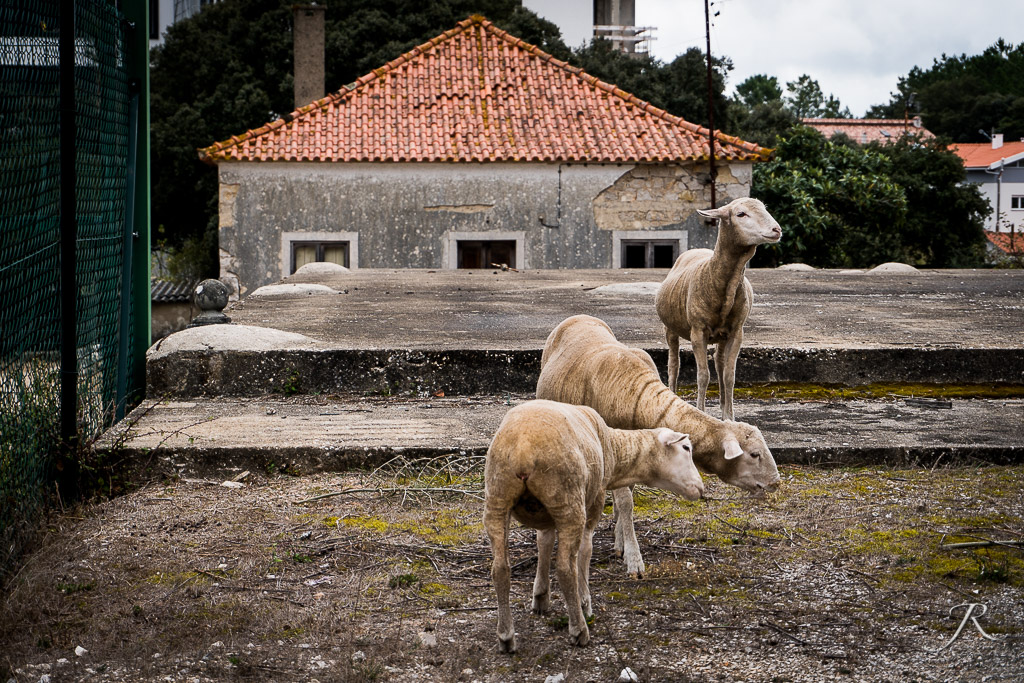 2019_PORTUGAL_A6500_WEB-110