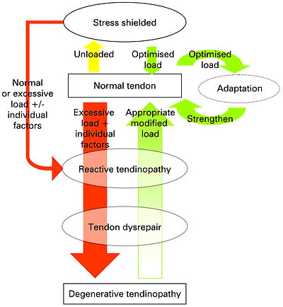 Tendinopathy Continuum