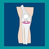 meniscus.png