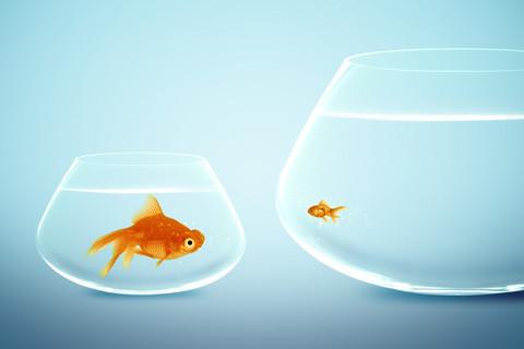 Big Fish vs Little Fish