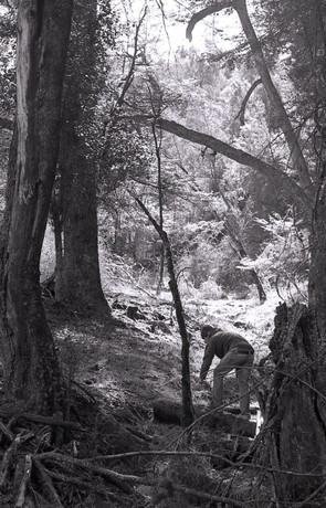 Bosque con hombre.jpg