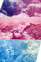 Reef print.jpg