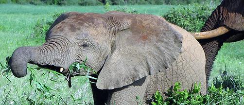 3-Days-Tsavo-East-Amboseli-1024x441.jpg