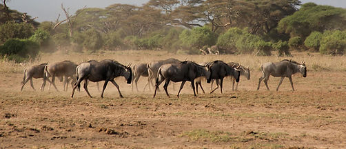 4-Days-Masai-Mara-By-Air-1024x441.jpg