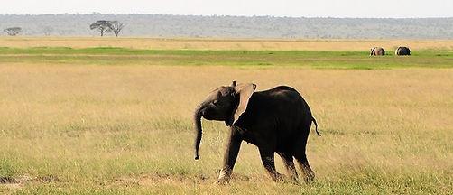 1-Day-Tsavo-East-Safari-1024x441.jpg