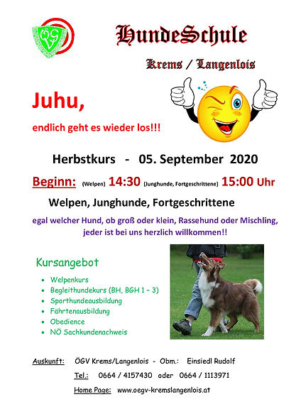 4-HundeSchule-Kursbeginn.jpg
