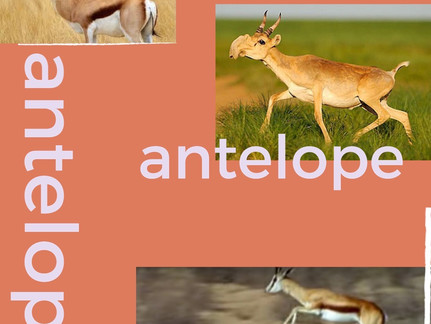 Antelope Vol. 1, Out Now!