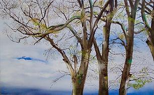 Old Elms, Point Leo, Victoria.jpg