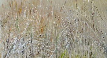 Bearded Oat & Towoomba Canary-grass.jpeg