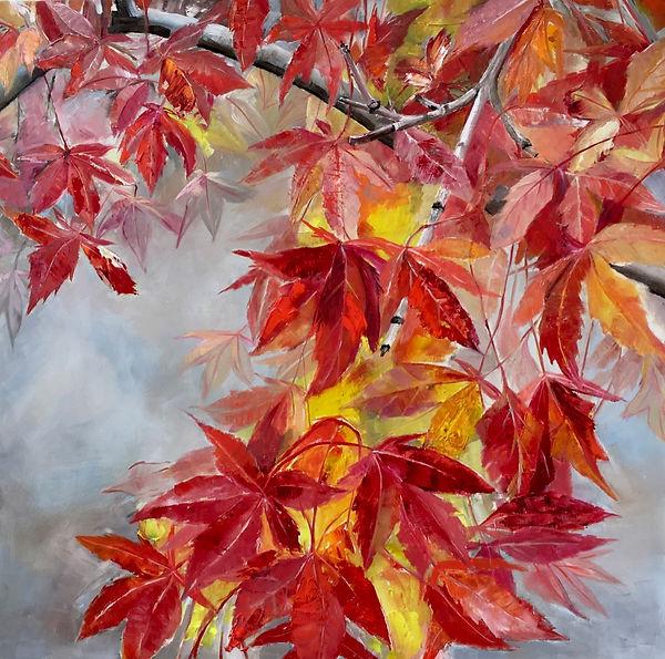 Coral-Bark Maples in Autumn.jpg