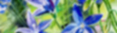 Royal Bluebell Act floral emblem.jpg