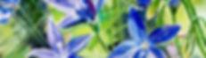 Royal Bluebell Act floral emblem.jpg