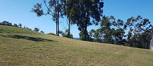 Grass trees 2.jpg