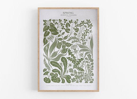 Foraging Poster - Spring