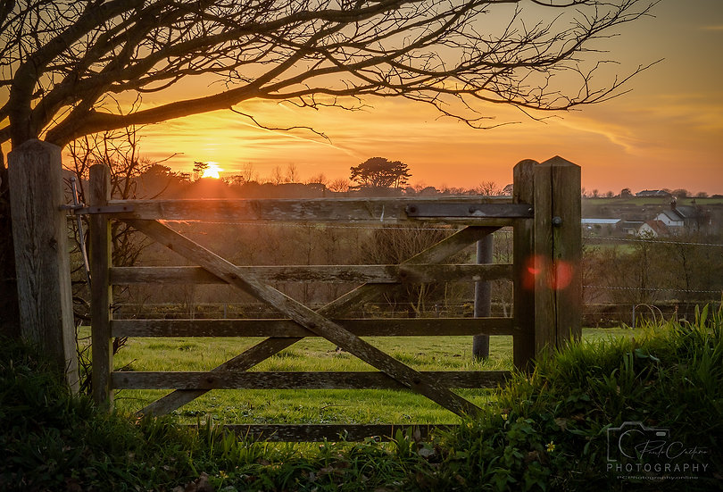 Golden Sunset Over The Field & Gate, St Saviours (PCP0691)
