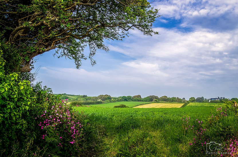 (Photo Framed) The Green Green Fields of St. Saviour's (DSC06329)
