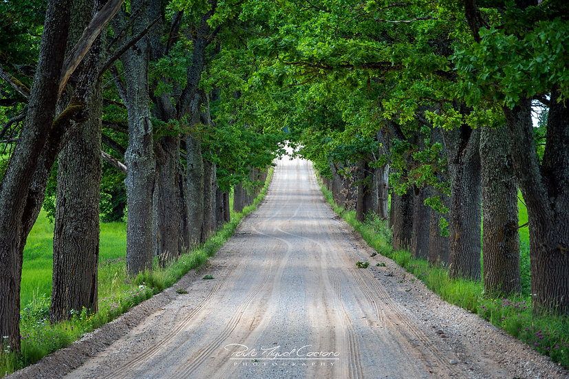 (Photo Framed) Common Roads of Cesis - Latvia Latvia (PMC3632)