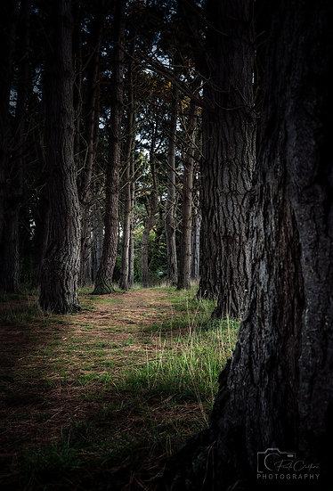 (Canvas) The Reservoir Woods, St. Saviours (PCP8072)