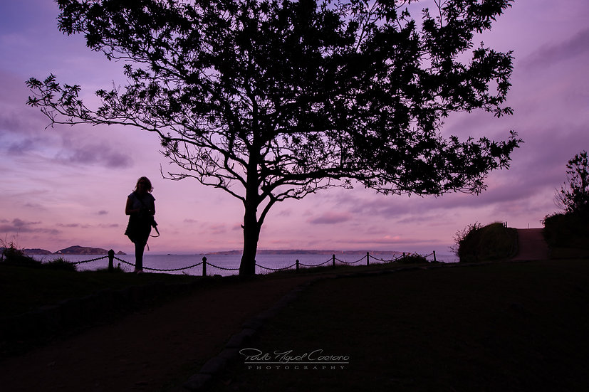 (Canvas) Purple Nights (PCO2054)