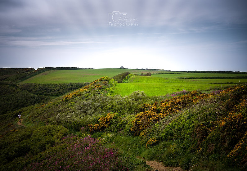 (Canvas) The Green Green Fields of Pleinmont (PCP0370)