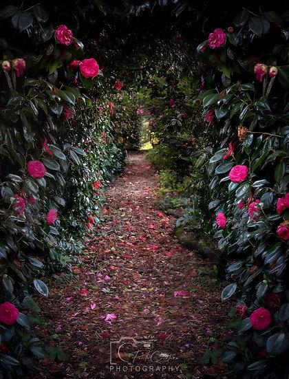 (Canvas)  Sausmarez Manor Garden Pathway (PCO8513V2)