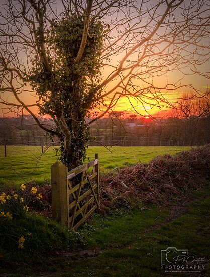 Golden Sunset Over The Field & Gate, St Saviours V2 (PCP0696)