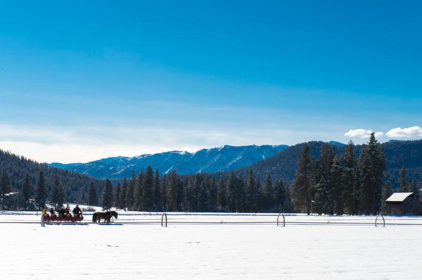 sleigh_field.jpg