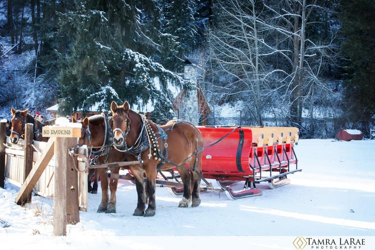 sleigh 1.jpg