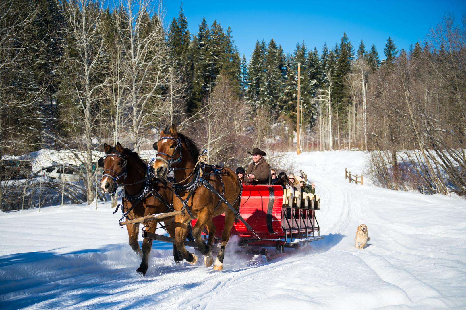 sleigh 4.jpg