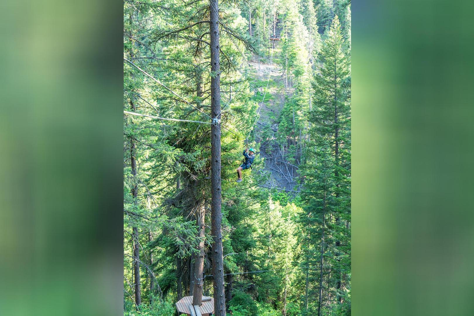 Tree Zip