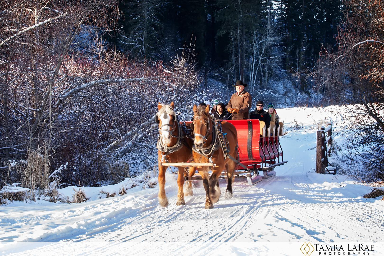 sleigh 2.jpg