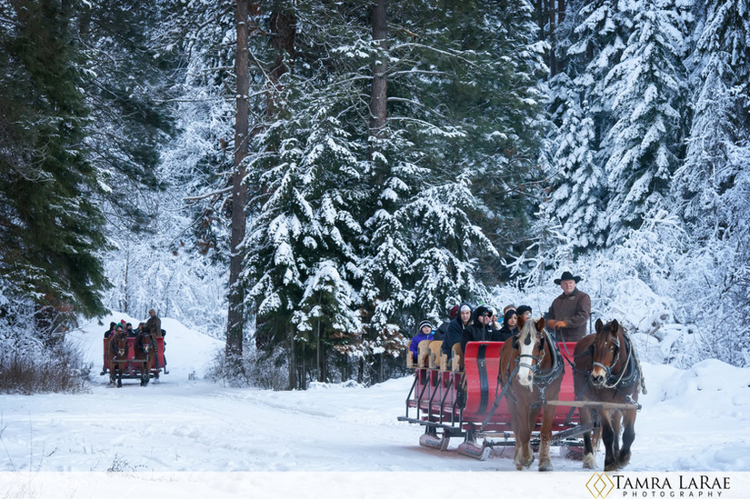 sleigh 3.jpg