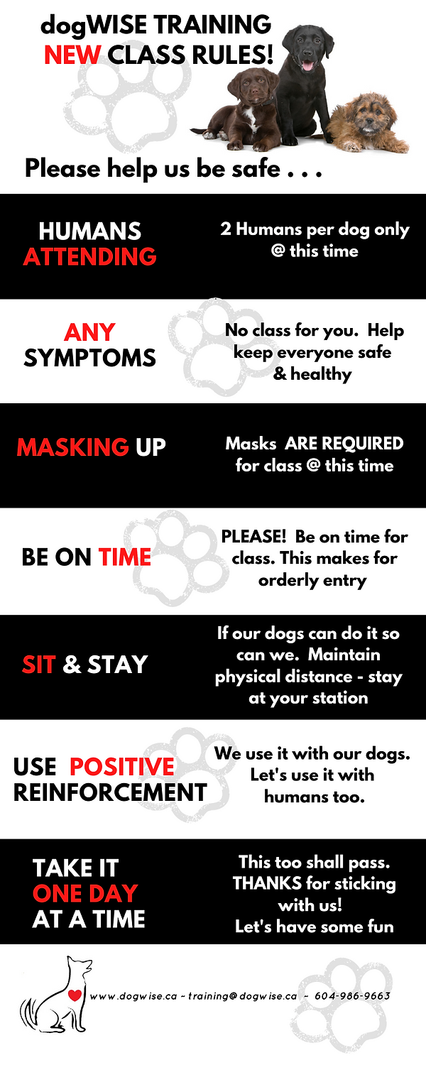 dogWISE Class Rules 3.png
