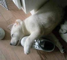 Puppy sleepig