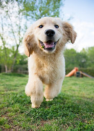 Puppy Student